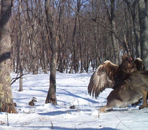 EagleDeer3-e1380052770804