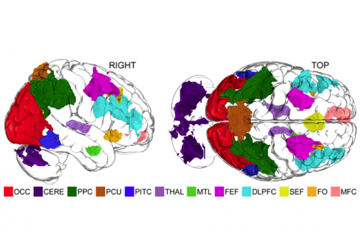 brainactivation