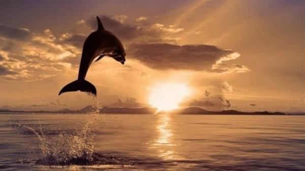 golfinhos4