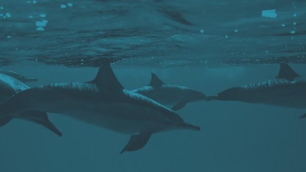 golfinhos5