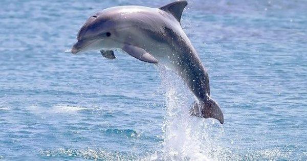golfinhos7