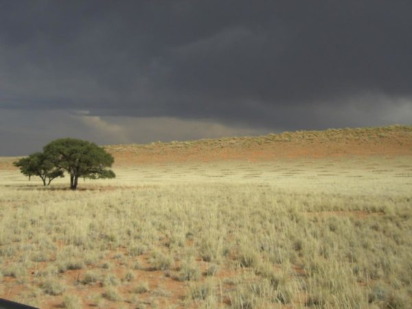 namib-fairy-circles
