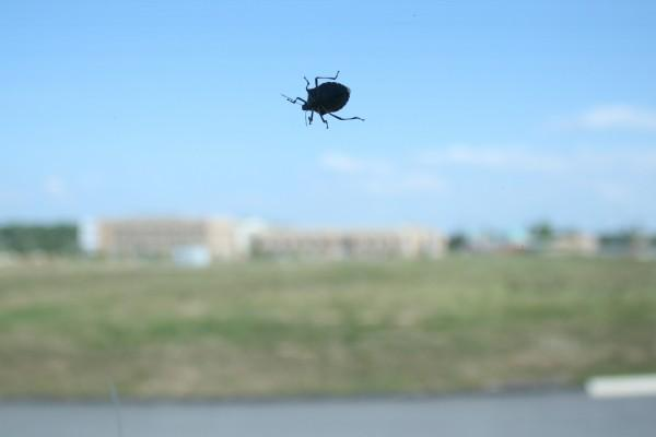 stink-bug-outside-on-window
