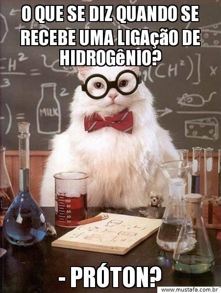 gato da ciencia mustafa