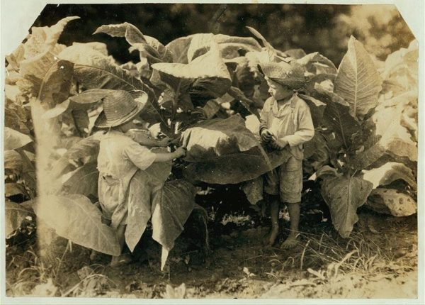 Amos, 6, e Horace, 4 anos, trabalhando em campos de tabaco