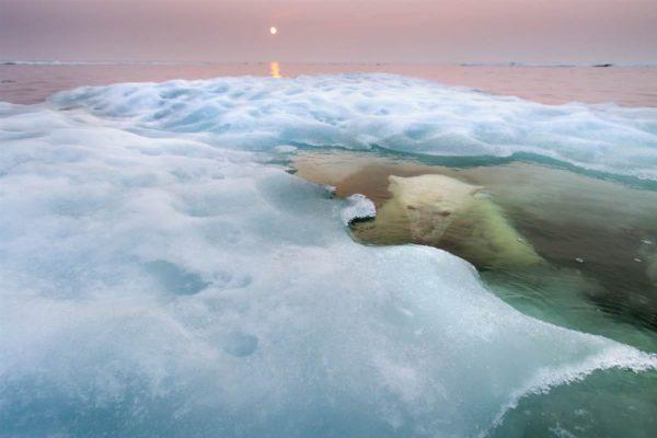 """""""The water bear"""", ou """"O urso de água"""", de Paul Souders (EUA), vencedor da categoria """"animais em seu ambiente"""""""