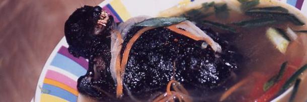 Resultado de imagem para morcego chinês