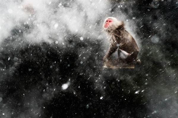 """""""Snow moment"""", ou """"Momento de neve"""", de Jasper Doest (Holanda), vencedor na categoria """"visões criativas"""""""