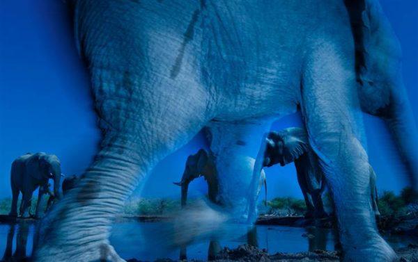 8C9392846-ss-131015-wildlife-photographer-10.blocks_desktop_large