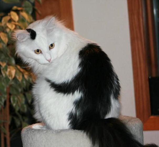 33 Ideias Para Transformar Sua Casa Normal Em Fantástica: 10 Gatos Com Pelagem Incrível