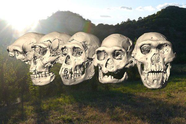 Cinco crânicos de H. erectus encontrados em Dmanisi