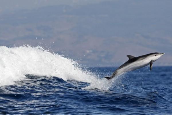 Golfinhos espécies