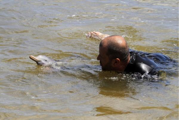 salvamento resgate golfinho órfão