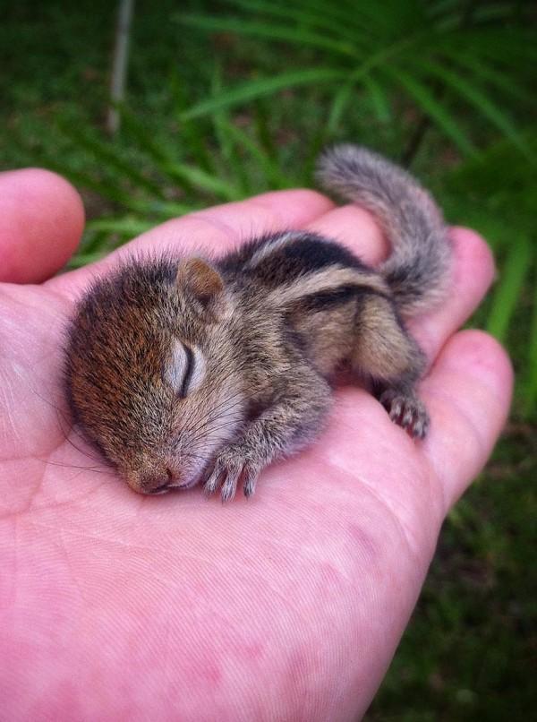 abandoned-squirrel-sri-lanka-paul-williams-17