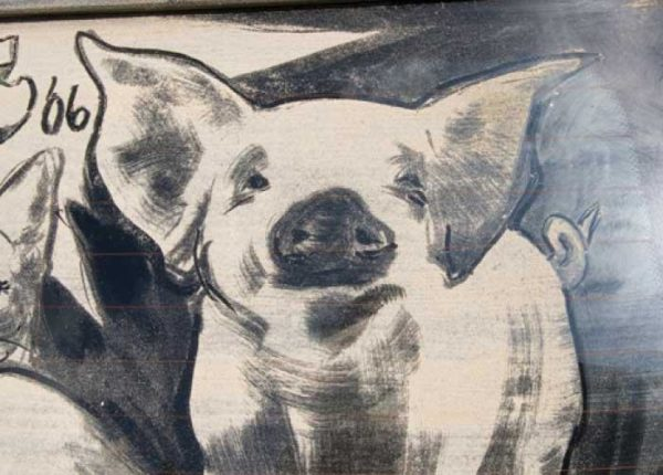 057_pig