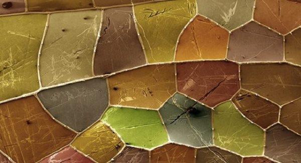 Micro: asa de uma libélula (por Paul Kelly)