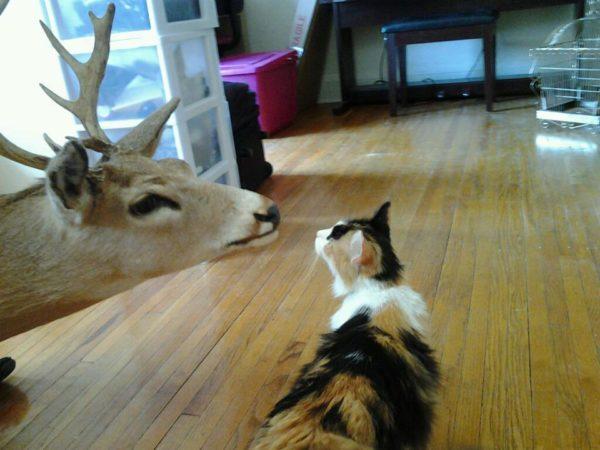 """""""Se um gato está perseguindo um veado a 24 km/h, e o veado está a uma velocidade de 16 km/h, o gato deve correr mais que o veado, bem a tempo de mudar de ideia e fugir para a direção contrária"""""""