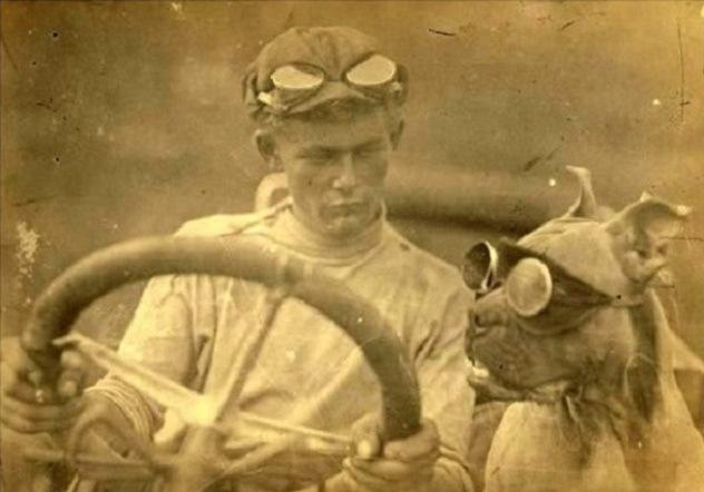 bud nelson driving dog