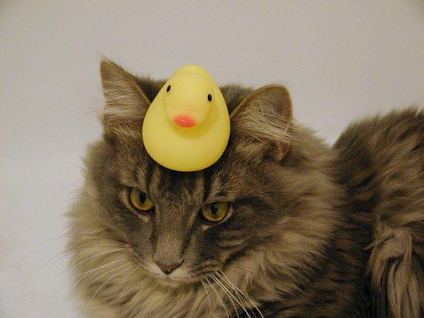 """""""Vou colocar meu pato da reflexão, ou melhor, chapéu, e começar de novo"""""""