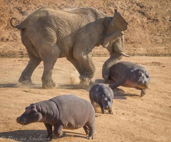 hippo-and-elephant