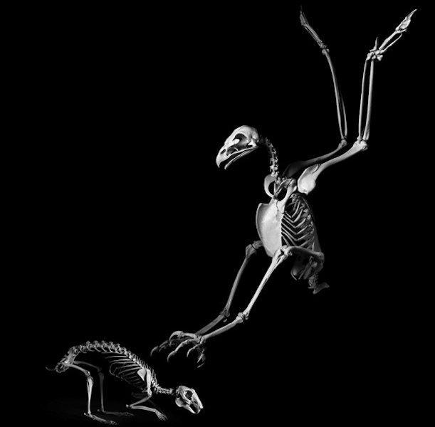 Esqueletos de animais escultura