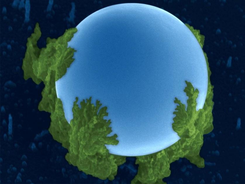 Esta imagem de microscópio eletrônico que lembra o planeta Terra mostra o surgimento de nanofios de silício (verde) a partir de uma gota de índio (azul) durante o processo de crescimento da deposição física a vapor