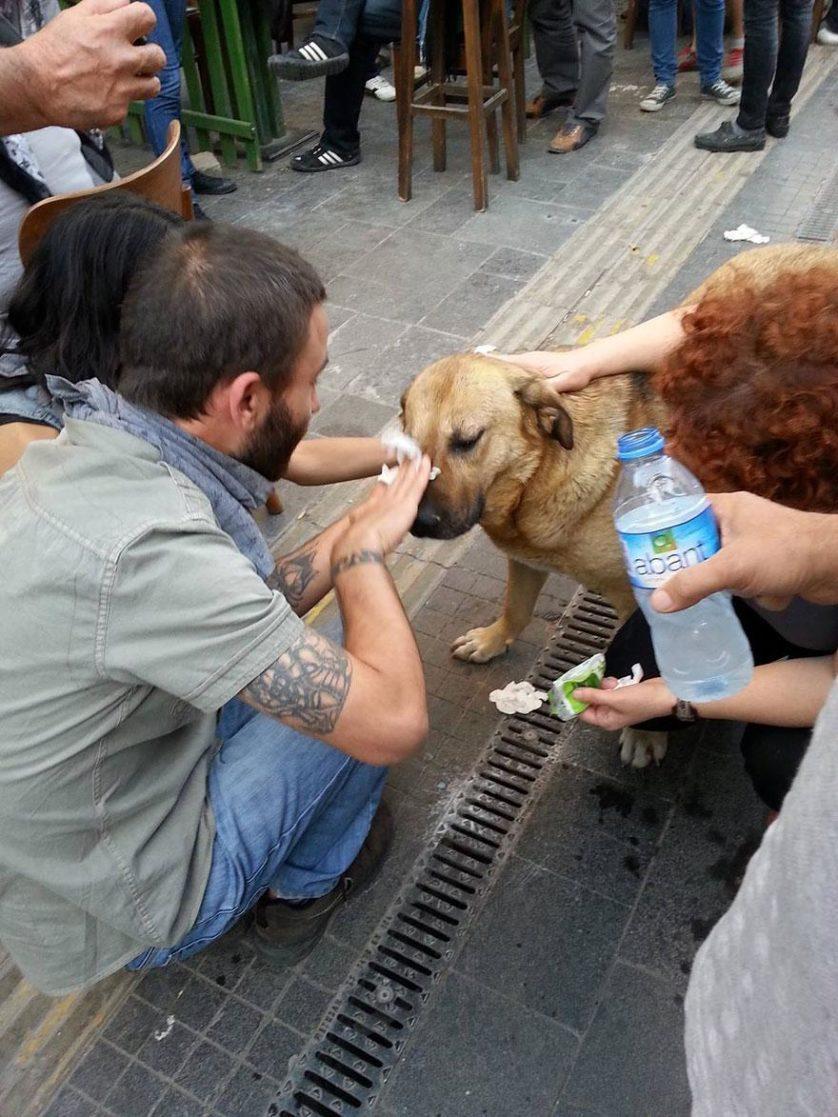 Manifestantes turcos ajudam um cão atingido por gás lacrimogêneo durante um confronto com a polícia em Istambul, Turquia, 2013