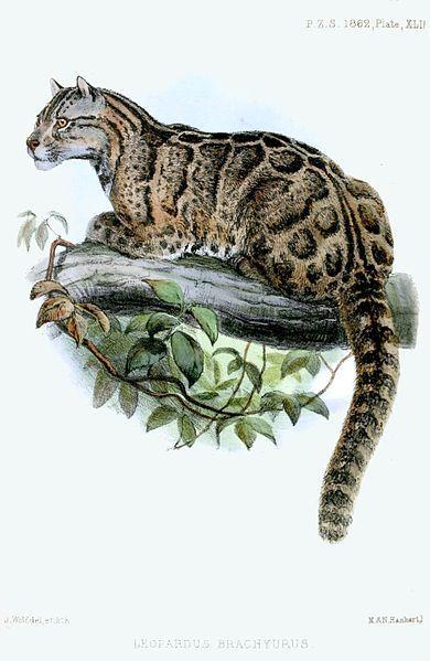 animais extintos em 2013 leopardo