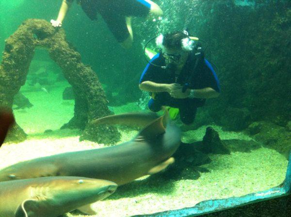 aquario_de_natal_RN__mustafa_ali_kanso_05