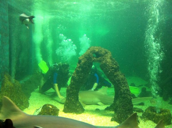 aquario_de_natal_RN__mustafa_ali_kanso_06