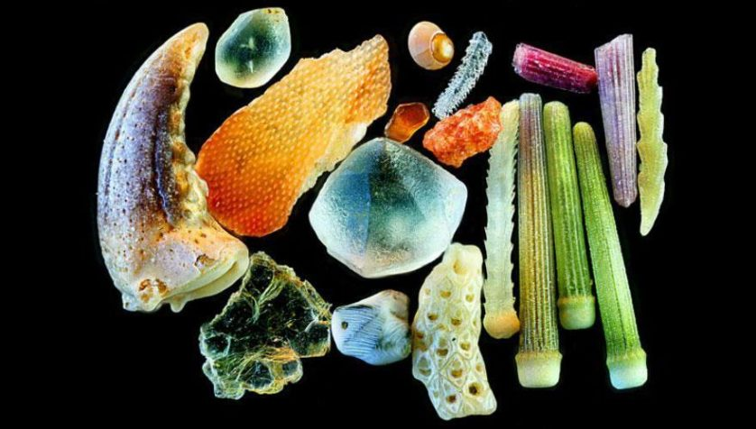 sand-grains-under-microscope-gary-greenberg-6