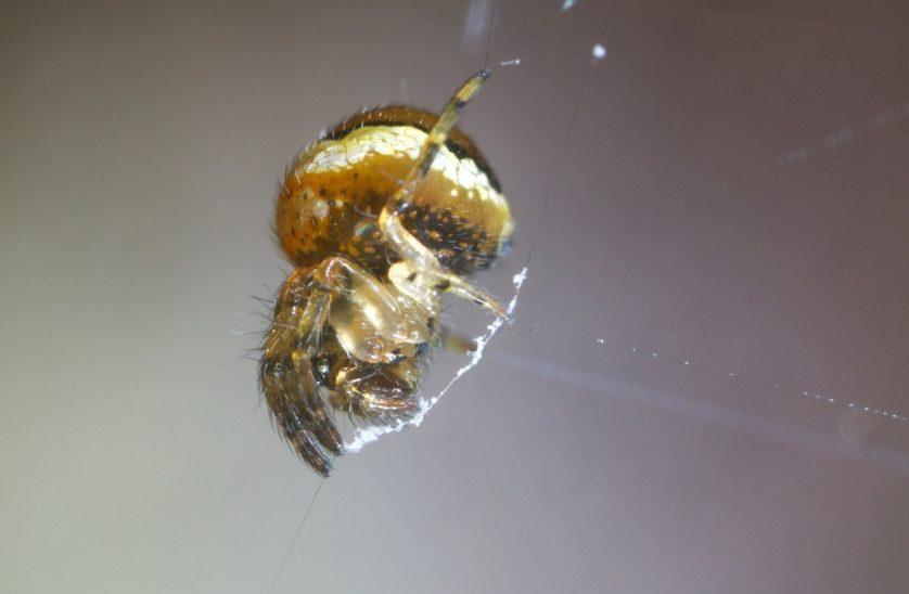 slingshot-spider3