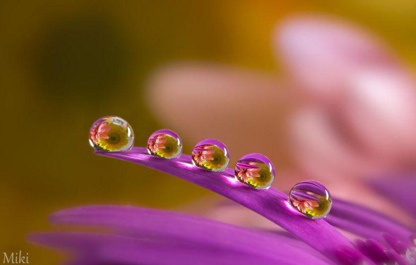 water-drops-miki-asai-14__880
