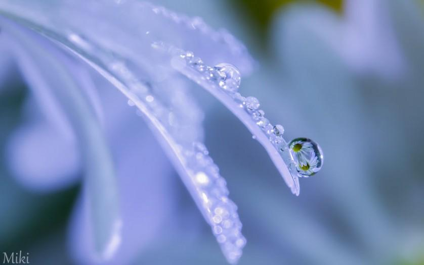 water-drops-miki-asai-15__880