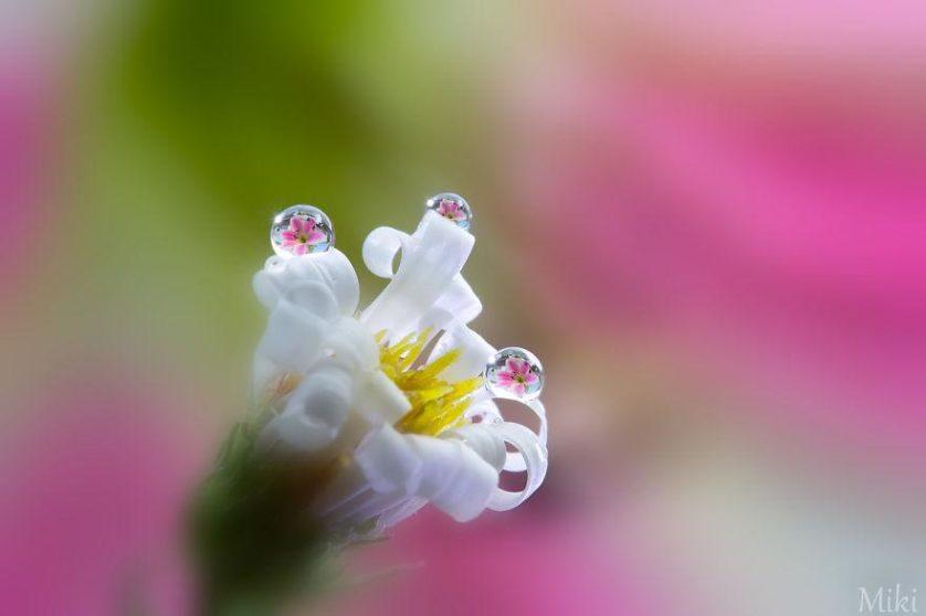 water-drops-miki-asai-2__880