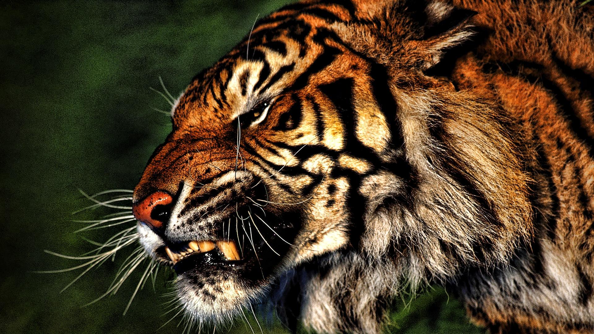 angry animals wallpapers - photo #10
