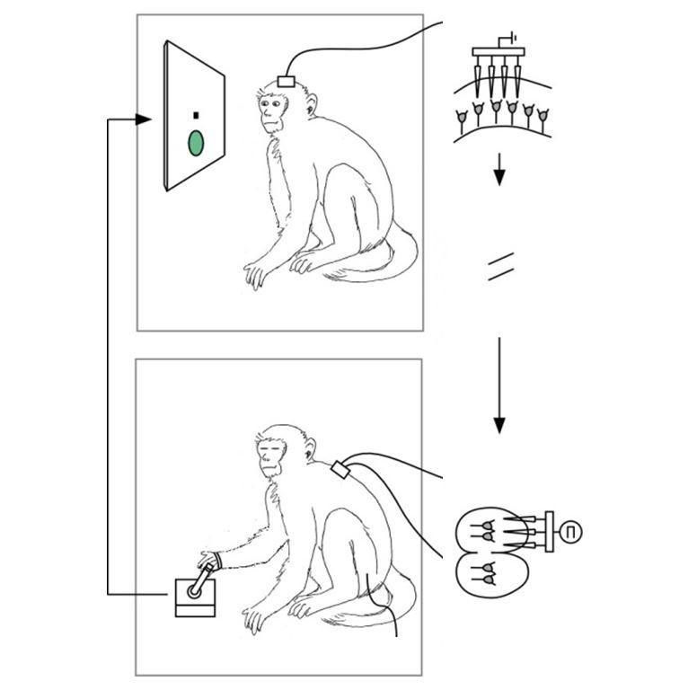 monkey-neural-prosthesis