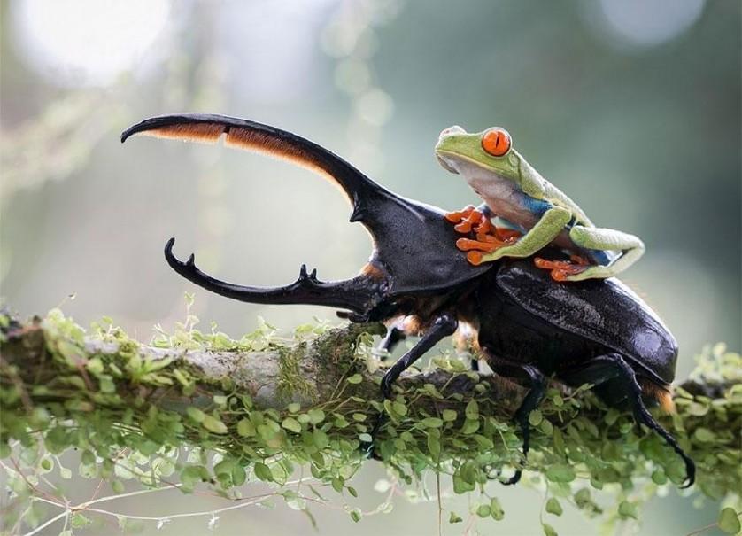 Um cavaleiro e seu alazão, Costa Rica. De  Nicolas Reusens.