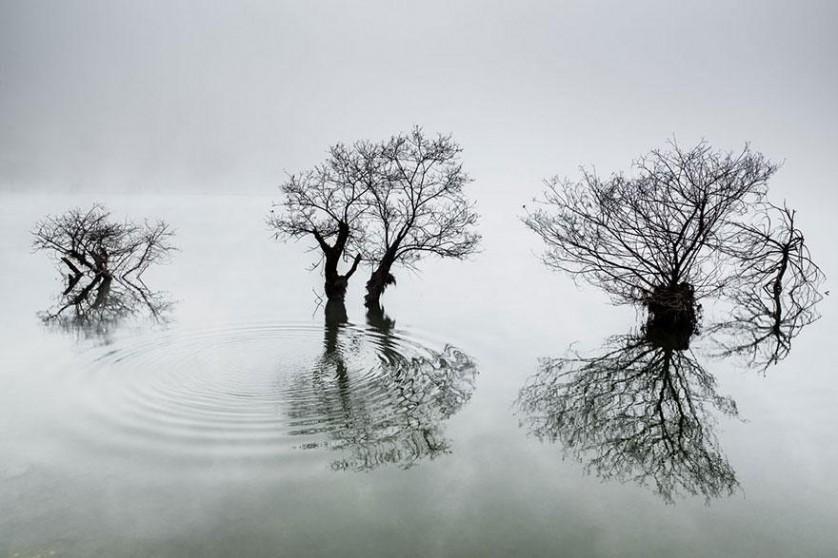 """Prêmio Nacional Coreia do Sul: """"Ondulações no lago calmo"""", por Dowon Choi, Coreia"""