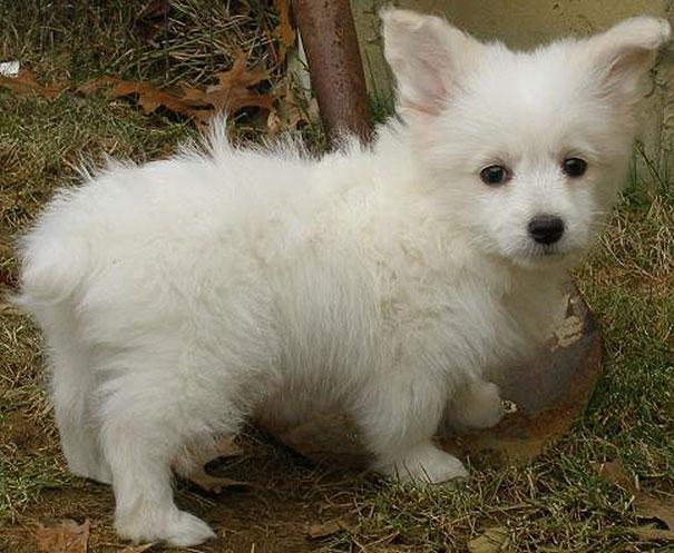 21 cachorros de raça cruzada que vão fazer você se apaixonar ...