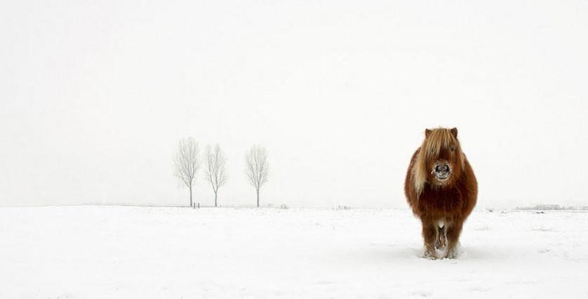 """Categoria natureza e vida selvagem: """"O pônei frio"""", por Gert van den Bosch, Holanda"""