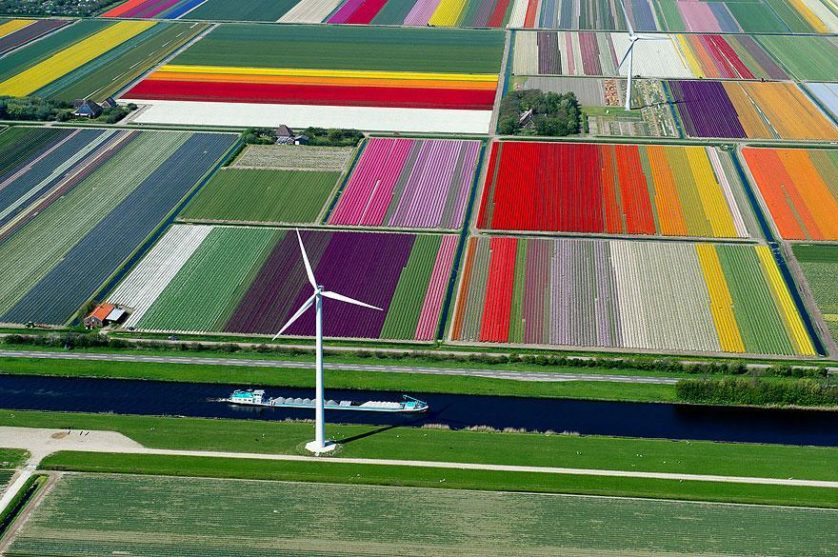 flower-tulip-fields-netherlands-12