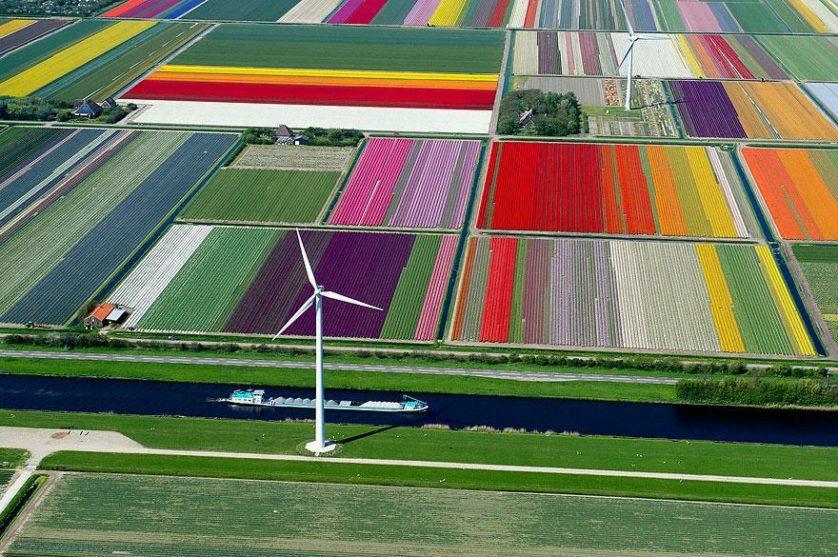flower-tulip-fields-netherlands-12