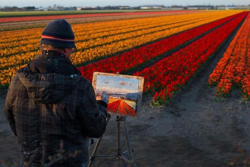 flower-tulip-fields-netherlands-15
