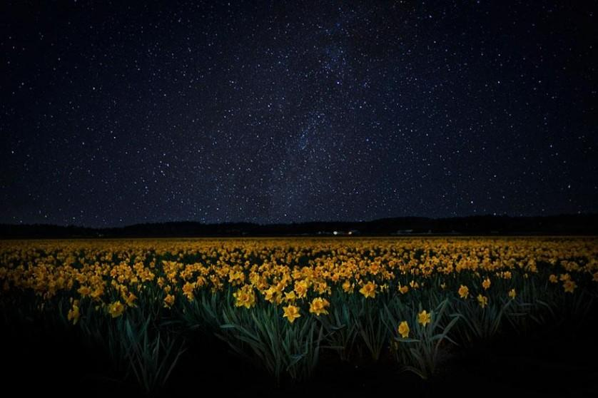 flower-tulip-fields-netherlands-4
