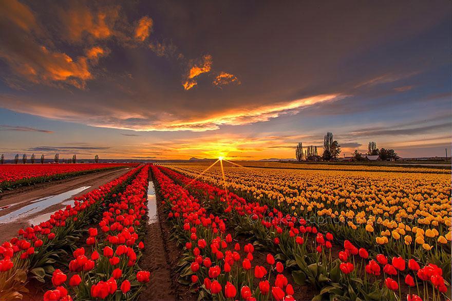 Resultado de imagem para imagens lindas de campos floridos