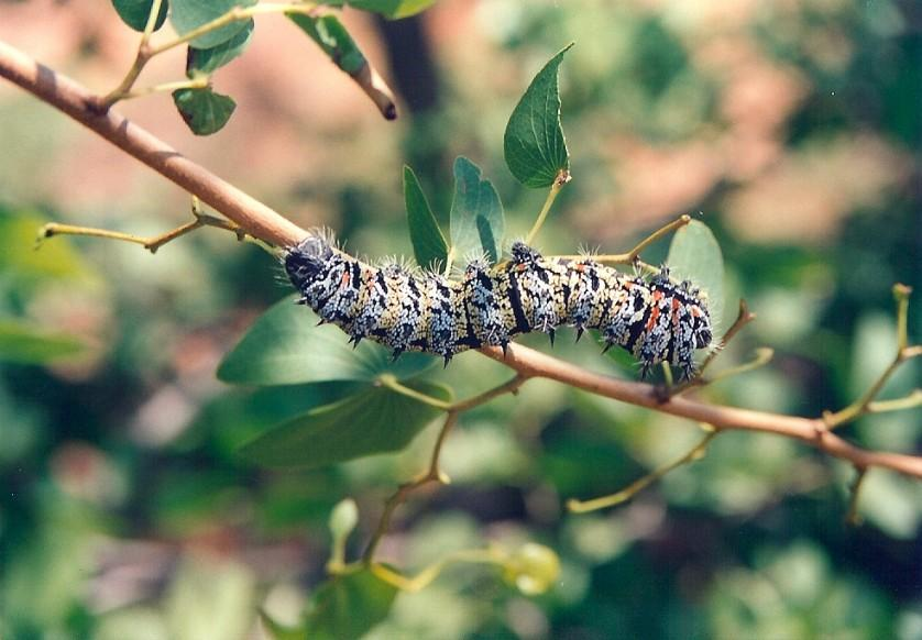 insetos que vamos comer um dia