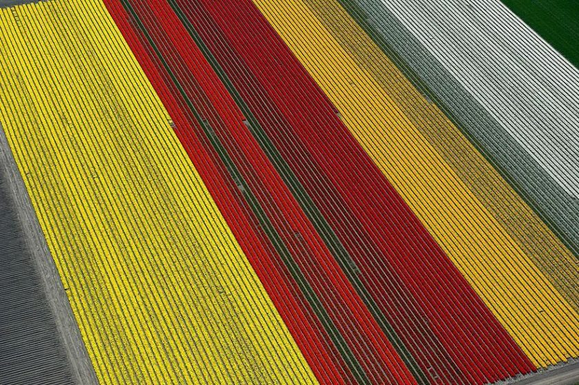 tulip-fields-aerial-view-normann-szkop-9