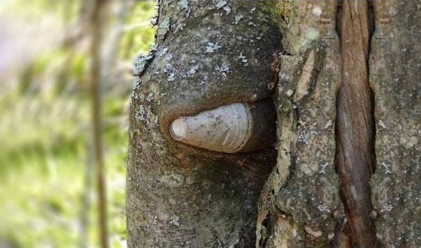 Pedaço de canhão de 75 milímetros debaixo das dobras de uma árvore