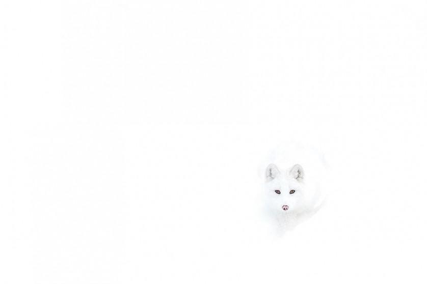amazing-fox-photos-10